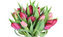 macro sur les tulipes du Bouquet rond Prunelle