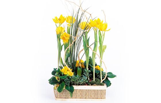 image de la Composition de plantes Narcisses au Vent