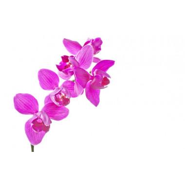 macro sur les fleurs de l'Orchidée Rose Mauve Une Branche