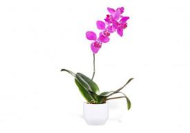 Orchidée Rose Mauve Une Branche