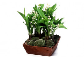 Composition de muguet Clochette