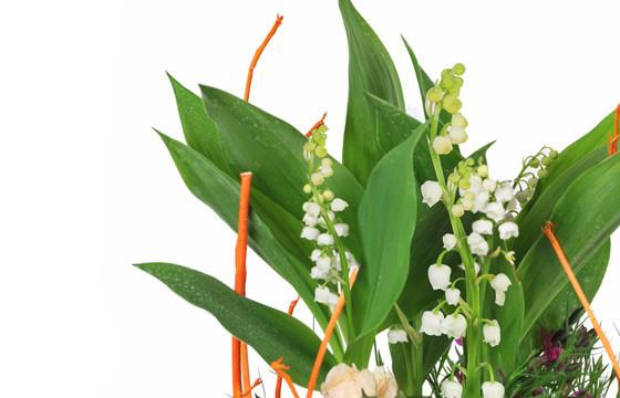 Assemble de plantes Aubaine |Livraison fleurs & Muguet pour 1er Mai