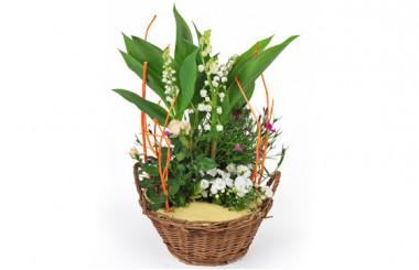 image de la Assemblage de Plantes Aubaine
