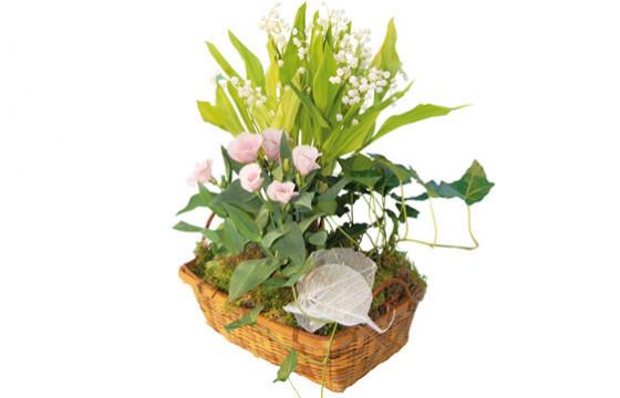 Assemblage de plantes racines | Livraison de fleurs & Muguet 1er Mai