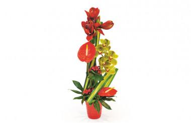 L'Agitateur Floral  Image de couverture composition Feu d'Artifice