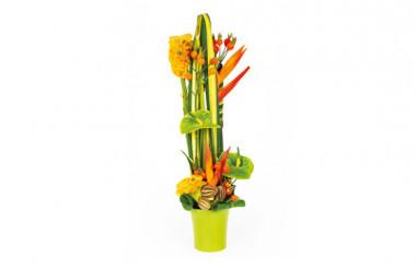 Image de couverture composition de fleurs colorées Cesaria