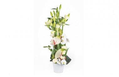 Image de couverture composition florale blanche Meringue