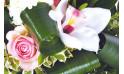 zoom sur une rose rose et fleur blanche