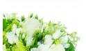 L'Agitateur Floral | zoom sur une rose blanche du bouquet de fleurs blanches Clarté