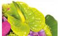 zoom sur un anthurium vert du bouquet