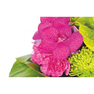 zoom sur un fleuron d'orchidée fuchsia
