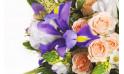zoom sur un iris de couleur parme