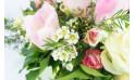 Gros zoom couverture composition Fleurs des Bois