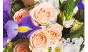 zoom sur trois roses roses