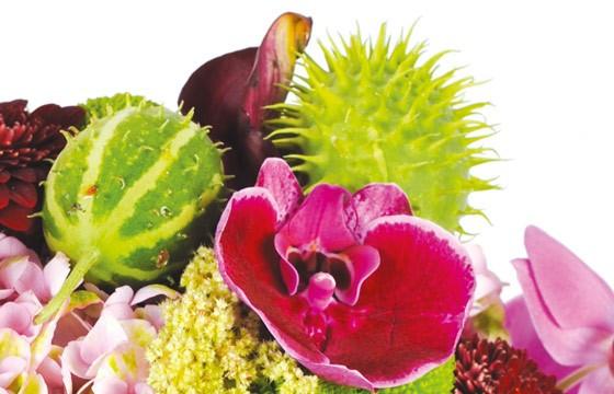 L'Agitateur Floral | zoom sur une amarante du bouquet de fleurs