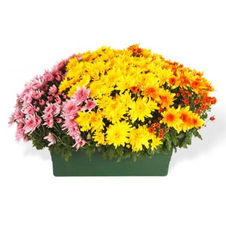 L'Agitateur Floral  Jardinière de Chrysanthème tons jaune orange et rose