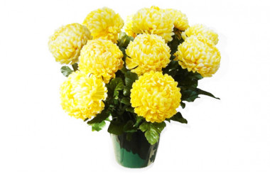 Image principale Chrysanthème boule jaune