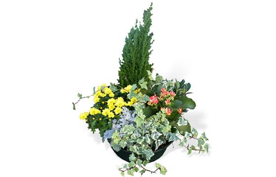 Assemblage de plantes vertes et colorés | Livraison Deuil & Toussaint