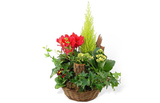coupe de plantes vertes rouges livraison composition pour un deuil l 39 agitateur floral. Black Bedroom Furniture Sets. Home Design Ideas