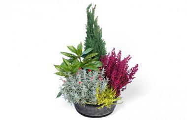 L'Agitateur Floral |image de la coupe de plantes vertes d'extérieur