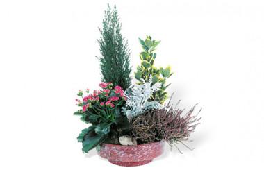 L'Agitateur Floral |Coupe de plantes vertes & fleuries Adieu Eternel