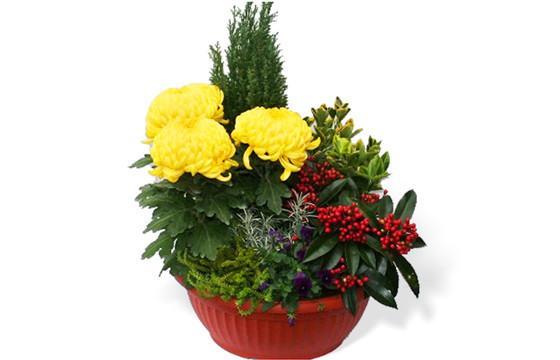 L'Agitateur Floral |image de la Coupe de plantes Jaune et Rouge pour cimetière