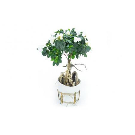 Agitateur Floral | Azalée sur tige blanche décorée