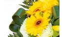 zoom sur un gerberas jaune