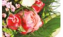 zoom sur une rose rose de la création florale
