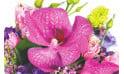 L'Agitateur Floral | zoom sur une orchidée vanda