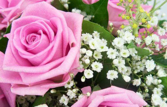 L'Agitateur Floral | vue sur le gypsophile