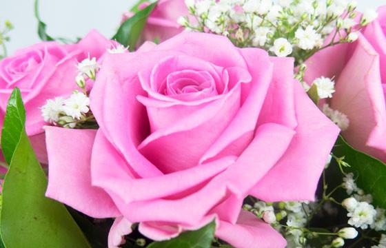 L'Agitateur Floral | vue sur une rose rose