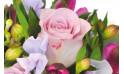 zoom sur une rose parme rose