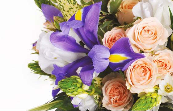 L'Agitateur Floral | zoom sur un iris de couleur parme