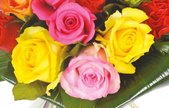 L'Agitateur Floral | zoom sur quatre roses jaune, rose & fuchsia