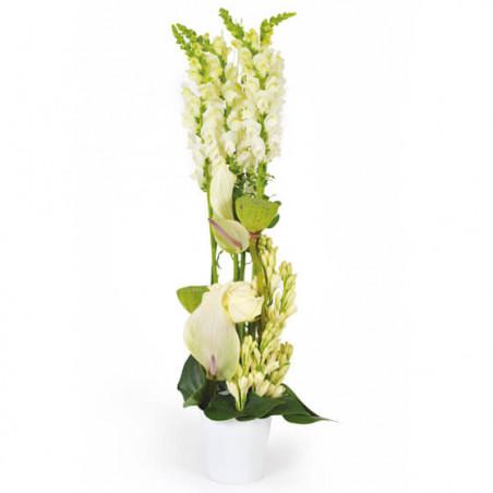 L'Agitateur Floral |image de la composition de fleurs blanches Sissi