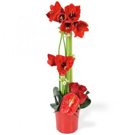 L'Agitateur Floral |image de la Composition de fleurs rouges Fidji