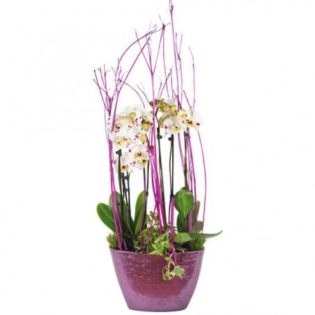 L'Agitateur Floral | image sur la coupe d'orchidée blanches à coeurs rose