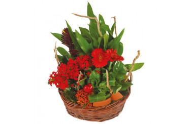 L'Agitateur Floral | image du Panier de plantes Antho le Jardinier