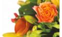zoom sur une rose orange du bouquet de fleurs