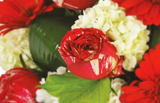 Zoom sur une rose rouge