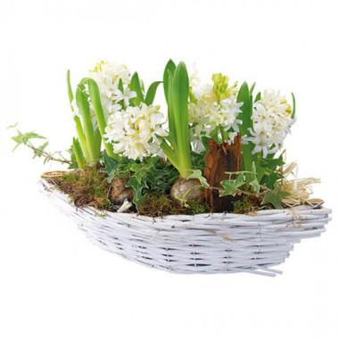 L'Agitateur Floral |image de la coupe de Jacinthes blanches Noce blanche
