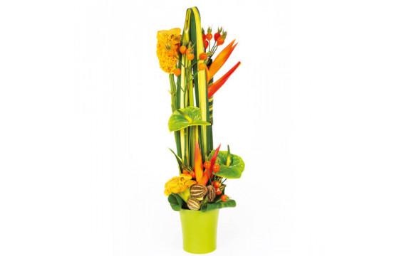 L'Agitateur Floral | Image de couverture composition de fleurs colorées Cesaria