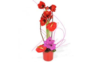 L'Agitateur Floral |image de la Composition d'Amaryllis Exaltant
