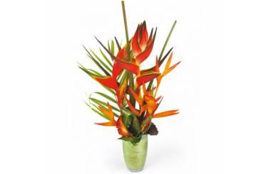 L'Agitateur Floral |image de la Composition Oiseaux du Paradis