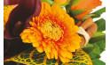 image d'un germini dans les tons oranges