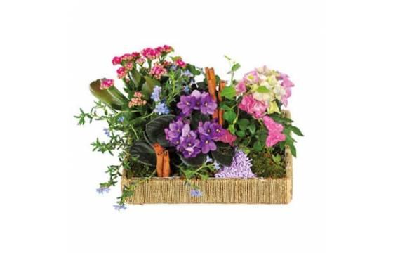 L'Agitateur Floral | image de l'assemblage de plantes le jardin enchanté