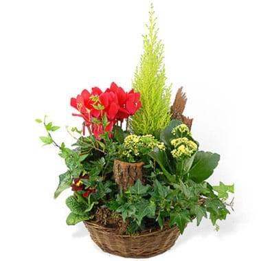 L'Agitateur Floral |Image de dla coupe de plantes vertes & rouges Rêve Florale