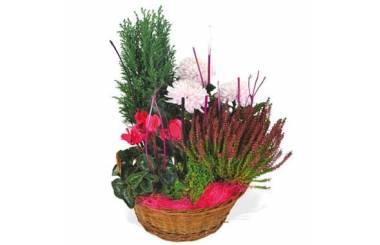 L'Agitateur Floral  image de la composition de plantes rouge et rose Le Jardin des Anges