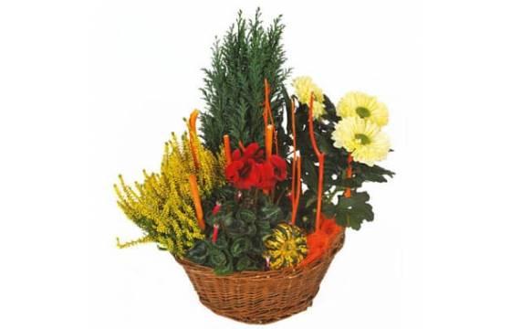 L'Agitateur Floral |image de la Composition de deuil rouge & jaune Jardin d'Hiver